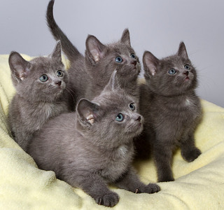 Smoky-Jo, Beemer, Binky, Enzi (in no particular order)  For information about donating, adopting, rehoming, volunteering, please contact ICAN: 250 341 7888 info@icanhelpapet.com